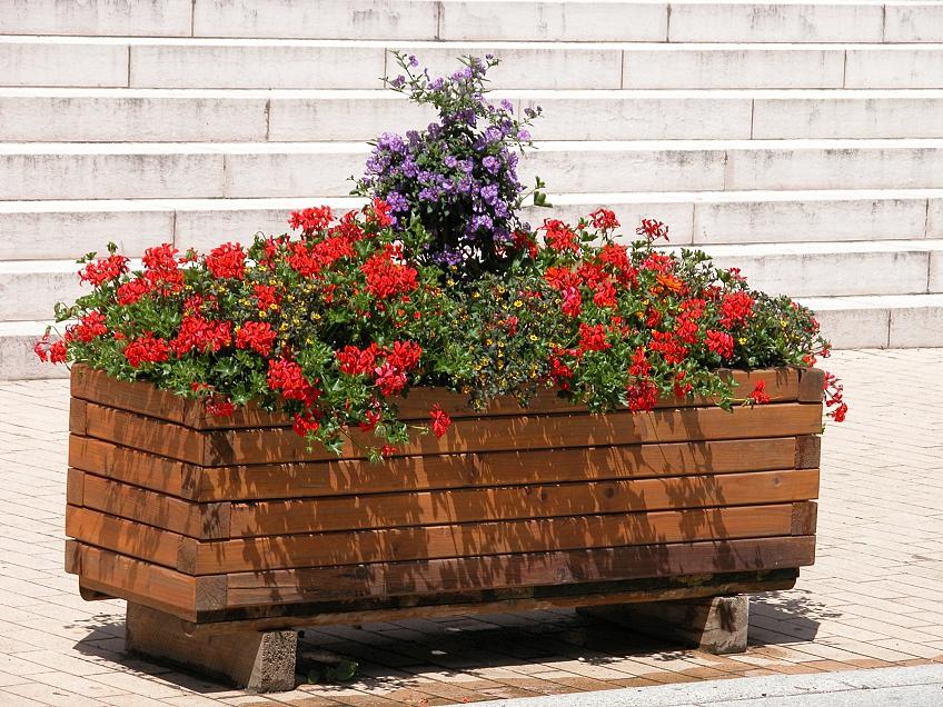 Bac à plantes bois Cologne