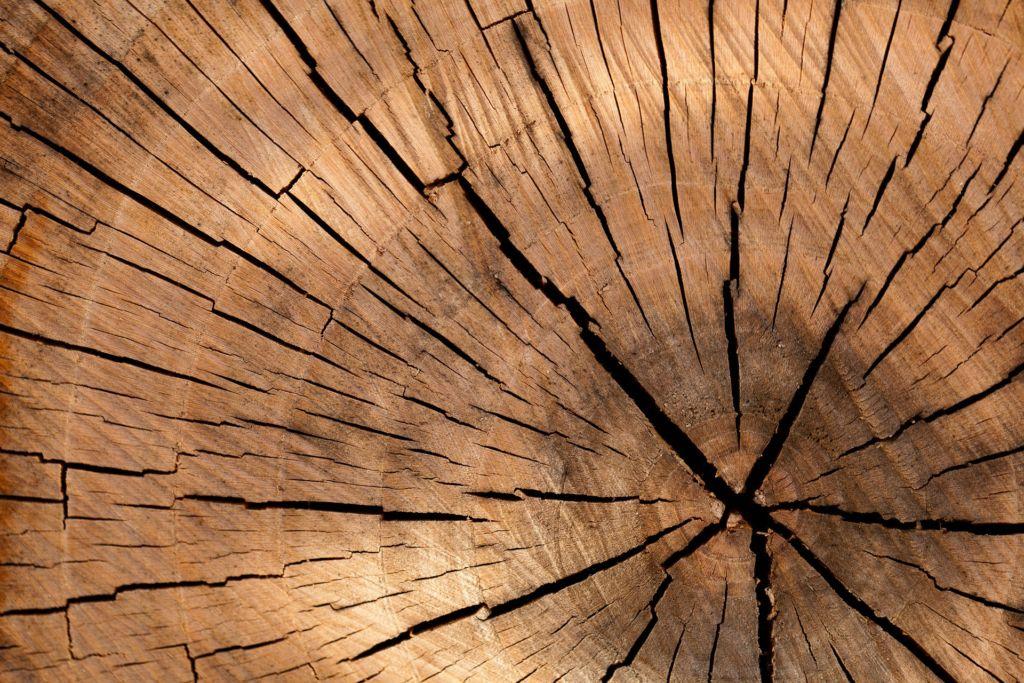 Le bois, matériau noble et écologique