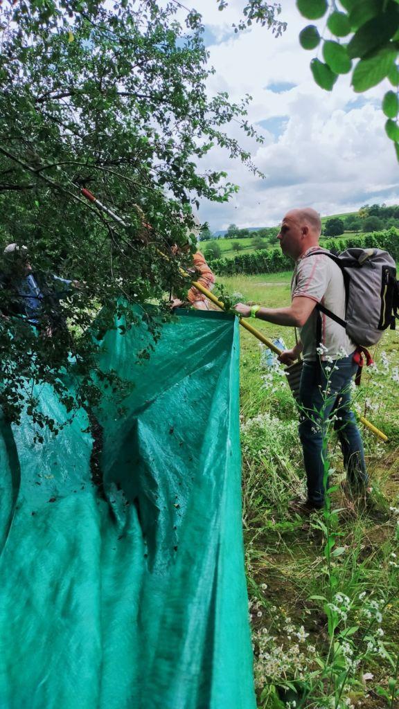 récolte de baies aux haies vives d'Alsace par Fabien THEVENOT