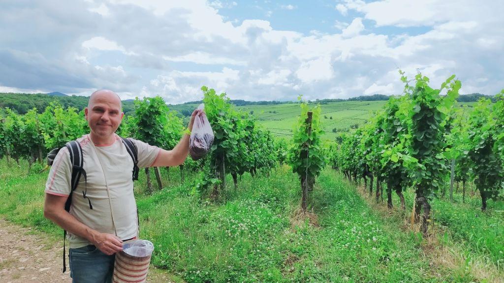 Résultat récolte de baies pour Haies vives d'Alsace par Fabien THEVENOT, dirigeant Rustyle